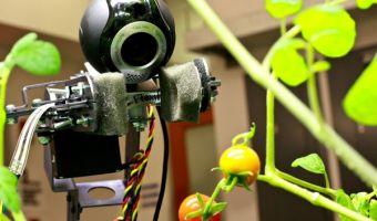 robottomatoes