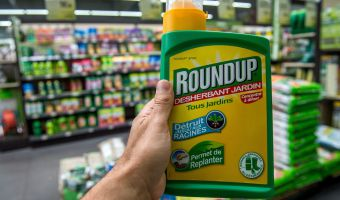 "This picture taken on June 15, 2015 shows a bottle of Monsanto's 'Roundup' pesticide in a gardening store in Lille. French Ecology Minister Segolene Royal announced on June 14, 2015 a ban on the sale of American biotechnology giant Monsanto's popular weedkiller from garden centres, which the UN has warned may be carcinogenic. The active ingredient in Roundup, glyphosate, was in March classified as ""probably carcinogenic to humans"" by the UN's International Agency for Research on Cancer (IARC). AFP PHOTO / PHILIPPE HUGUEN"