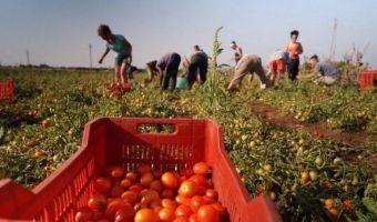 puglia-iniziativa-coldiretti-ospitalita-ai-migranti-sfruttati-nei-campi-agricoli--1462945023